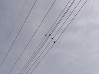 電線上のすずめ